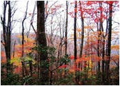 Autumn In Fontana Dam-Come Rent Our Cabin